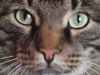 Надежда Гужева: Мы вас, щенки, научим котиков любить!