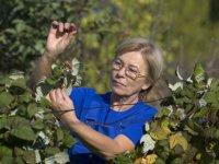 Как выращивать кустарники с самыми вкусными ягодами