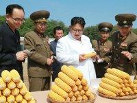 ФОТОрепортаж: Визит Ким Чен Ына на ферму №1116