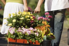 Не бойтесь сажать уже цветущие растения