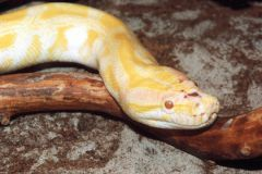 Змеи обитали 160 млн лет назад и питались динозаврами
