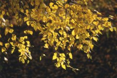 Погода в первой половине октября выдалась холодной
