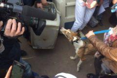 Первая спасённая собака