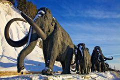Мамонты пригодятся в зоне вечной мерзлоты, считают учёные