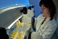 По мнению американских врачей, клетки личинок карликового цепня превратились в злокачественные образования