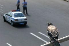 Мужчина открыл по полицейским огонь из автоматического оружия, когда те пытались остановить автомобиль