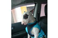Правила безопасного вождения распространяются и на домашних животных