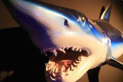 Последние случаи нападения акул на Гавайях были зарегистрированы в 2013 году