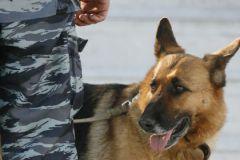 Орудие преступления нашла служебная собака