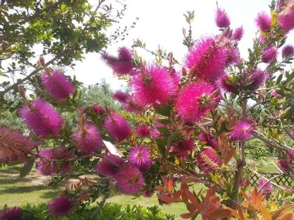 Запахи майских цветов упоительны