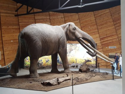 Представитель местной фауны, живший 5 тысячелетий назад