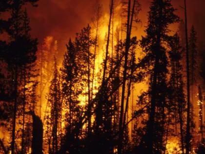 Читатели «Собеседника» уверены: в распространении пожаров виноваты власти