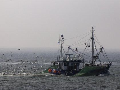 Внимание к системе рыбной отрасли привлекла трагедия с траулером «Дальний Восток»