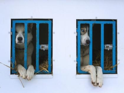 Это уже второе уголовное дело в Чите по факту нападения бродячих собак на школьников