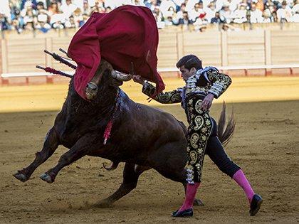 В Испании бык убил тореадора во время корриды