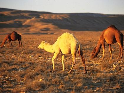 Животный мир Земли вступает в шестое массовое вымирание