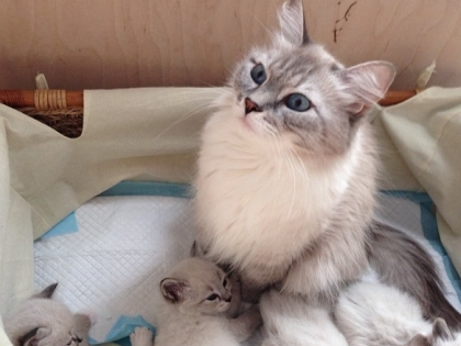 Новые котята Дмитрия Медведева - не от Дорофея