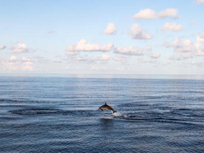 Трюки и смелость морских артистов поражают