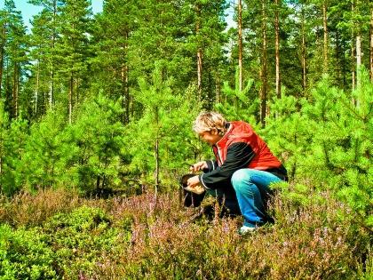Женщина собирает грибы в лесу