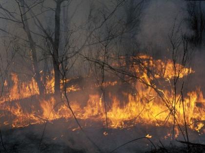 По словам министра МВД Украины, есть основания полагать, что пожары в зоне ЧАЭС — результат поджога