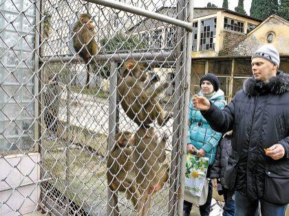 Чтобы прокормить приматов, НИИ вынужден пускать посетителей за деньги – но только в питомник