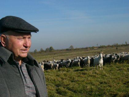 Хозяин на фоне отары в калининградском хозяйстве