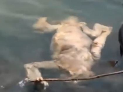 Тело странного животного в Кармен-дель-Паране