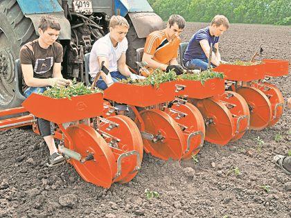 До полной импортонезависимости на рынке семян России еще очень далеко