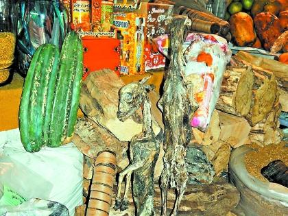 Рынок в Пилькопате, где можно купить подобные лиане мертвых штуки