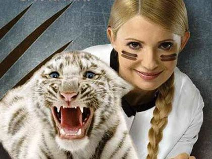Тигрица Юлии Тимошенко родила тигрят-альбиносов