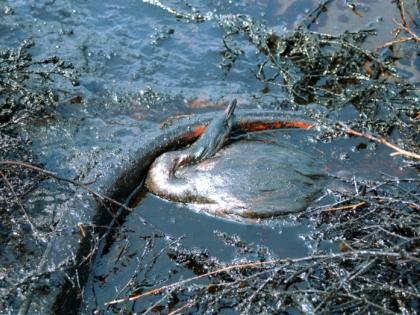 В Нефтеюганске произошла экологическая катастрофа